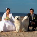 suņi kāzās