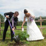 koka stādīšana kāzās