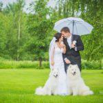 balti suņi kāzās, kāzu fotosesija