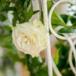 rozes kāzās