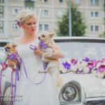 suņi kāzās, līgava ar suņiem