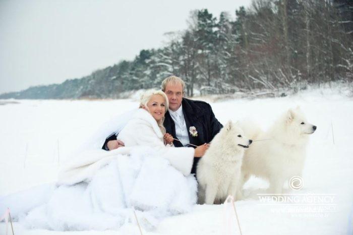 ziemas kāzas, suņi kāzās