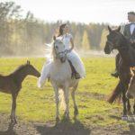 zirgi kāzās, jaunais pāris, Kāzu Aģentūra